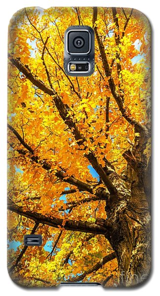 Galaxy S5 Case featuring the photograph Oak In The Fall by Mike Ste Marie