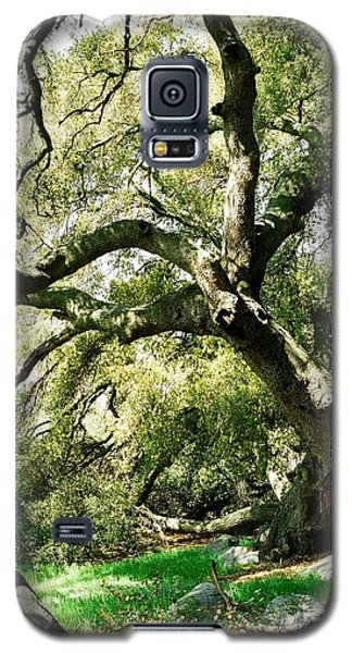 Galaxy S5 Case featuring the photograph Oak Spirit by Kathy Bassett