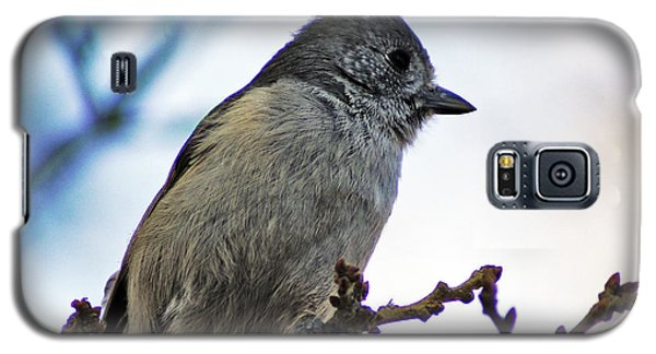 Oak Titmouse Galaxy S5 Case by Gary Brandes