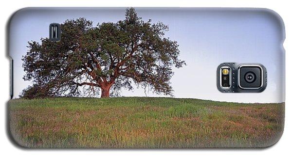 Oak Tree Glow Galaxy S5 Case