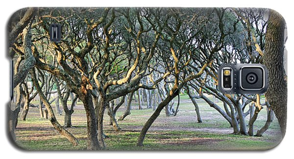 Oaks Of Fort Fisher Galaxy S5 Case by Phil Mancuso