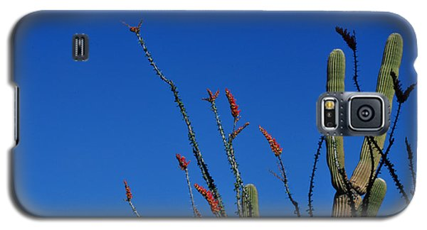 Galaxy S5 Case featuring the photograph Ocotillo And Saguaro by Diane Lent