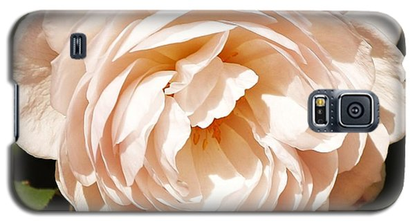 Galaxy S5 Case featuring the photograph October Rose by Al Fritz