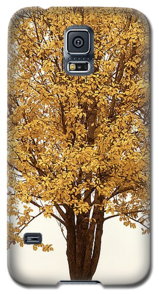 October Trees Galaxy S5 Case