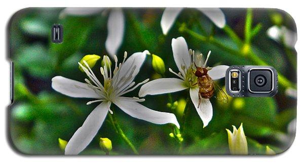 Odd Beauty Galaxy S5 Case