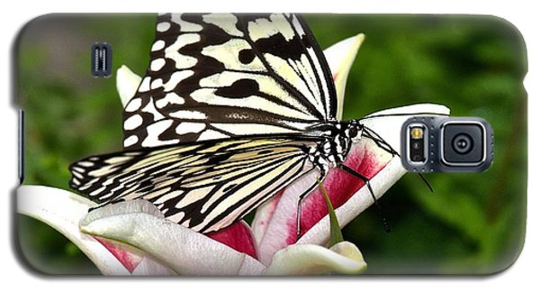 Galaxy S5 Case featuring the photograph Of Paper Kites And Lilies  by Ruth Jolly