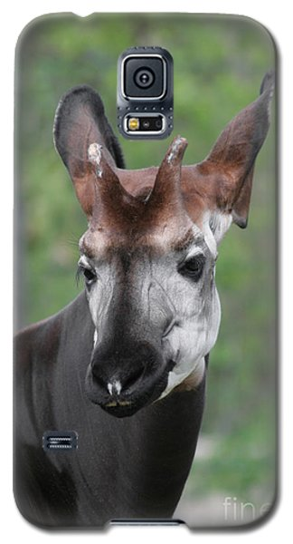 Galaxy S5 Case featuring the photograph Okapi #2 by Judy Whitton