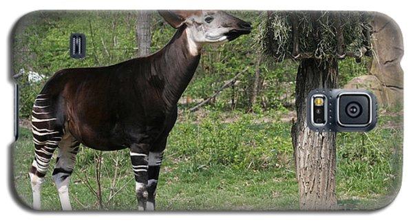 Okapi Galaxy S5 Case by Judy Whitton