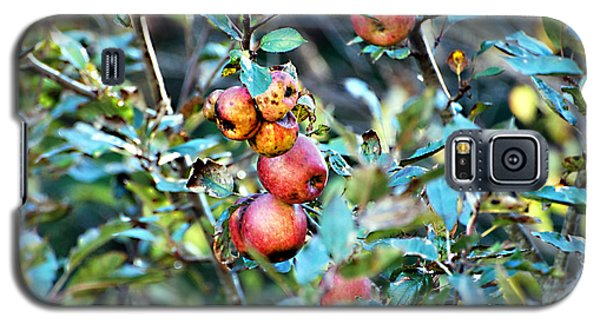 Galaxy S5 Case featuring the photograph Old Apples by Linda Cox