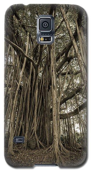 Old Banyan Tree Galaxy S5 Case