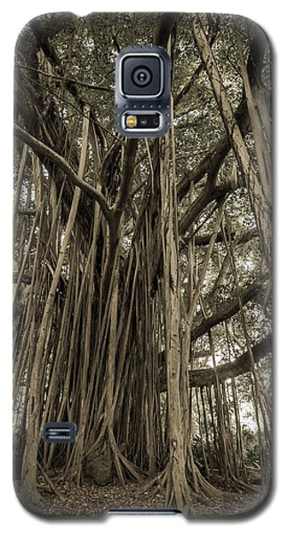Old Banyan Tree Galaxy S5 Case