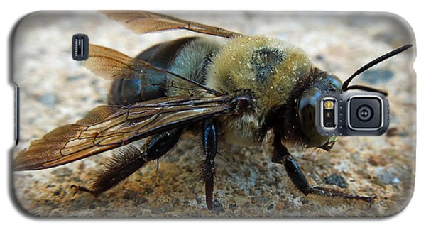 Galaxy S5 Case featuring the photograph Old Carpenter Bee by Pete Trenholm