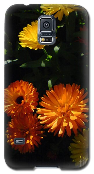 Galaxy S5 Case featuring the photograph Old-fashioned Marigolds by Martin Howard