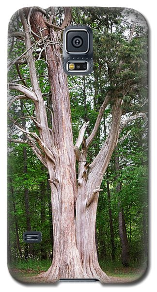 Galaxy S5 Case featuring the photograph Old Georgia Cedar by Pete Trenholm