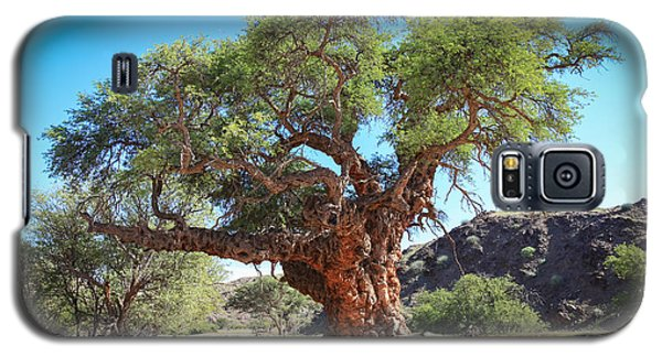 Old Gnarled Tree Galaxy S5 Case
