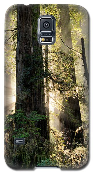 Old Growth Forest Light Galaxy S5 Case
