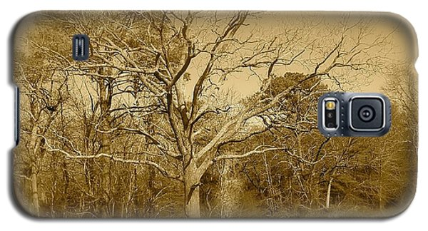 Old Haunted Tree In Sepia Galaxy S5 Case by Amazing Photographs AKA Christian Wilson