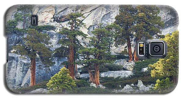 Old Juniper Pines Rule Galaxy S5 Case