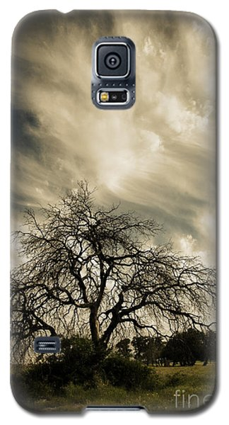 Old Oak Tree Galaxy S5 Case by Iris Greenwell