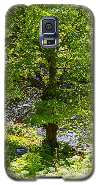 Old Small Leaved Lime At The Riverbank In Oravi Galaxy S5 Case