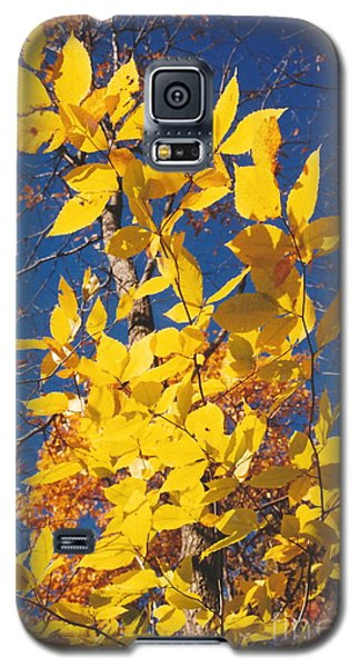 Galaxy S5 Case featuring the photograph 'ole Yeller by Jesse Ciazza