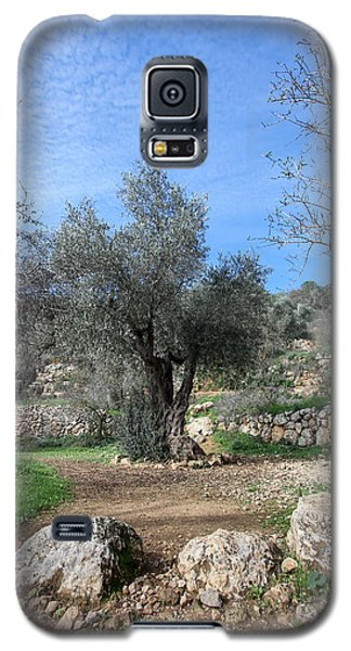 Olive Tree Galaxy S5 Case