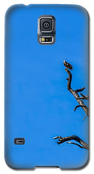 Osprey Galaxy S5 Case - On Point by Marvin Spates