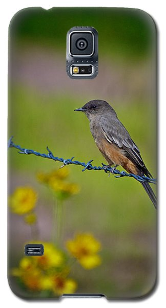 Galaxy S5 Case featuring the photograph Say's Phoebe by Britt Runyon