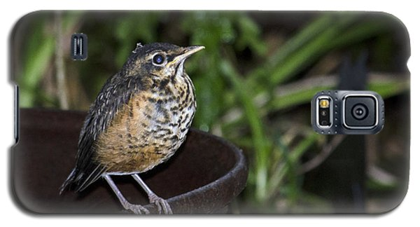 On The Fire Pot-fledging Robin Galaxy S5 Case