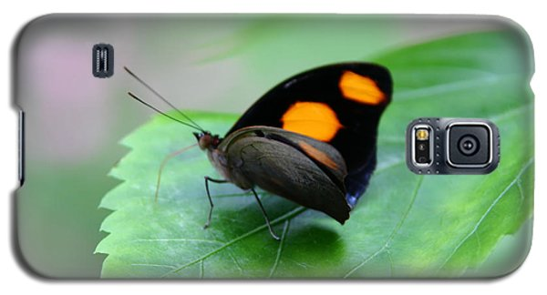 On The Leaf Galaxy S5 Case by Denyse Duhaime