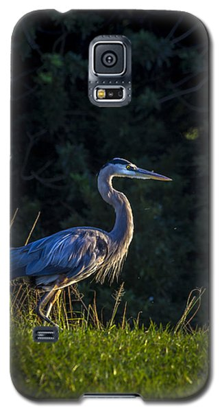Egret Galaxy S5 Case - On The March by Marvin Spates