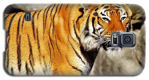 Galaxy S5 Case featuring the photograph On The Prowl by Jason Politte