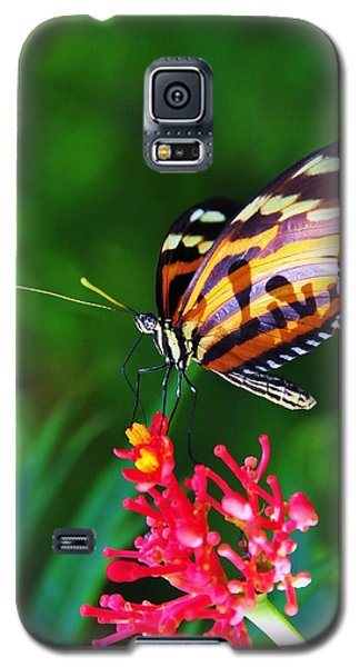 On The Wings Of Sweetness Galaxy S5 Case by Kicking Bear  Productions