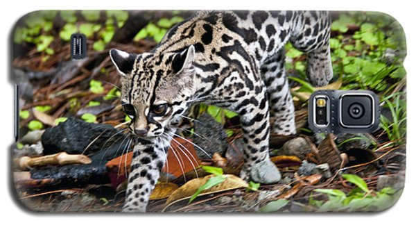 Galaxy S5 Case featuring the photograph Oncilla Cat by Dennis Cox WorldViews