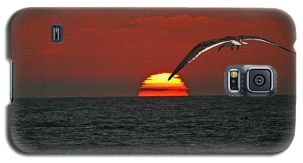 Galaxy S5 Case featuring the photograph One Black Skimmers At Sunset by Tom Janca