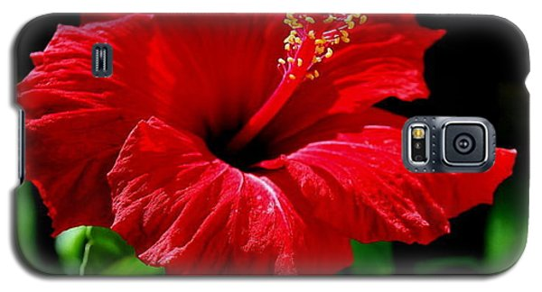 One Day Flower Galaxy S5 Case