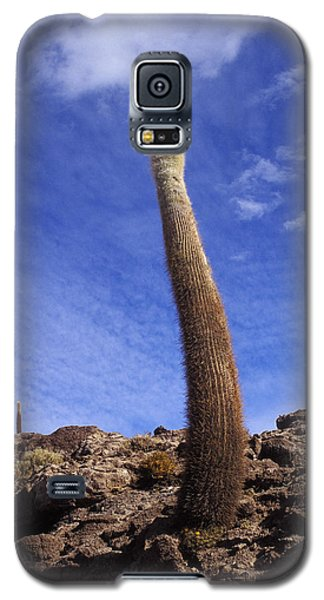 Galaxy S5 Case featuring the photograph One Enormous Cactus by Lana Enderle