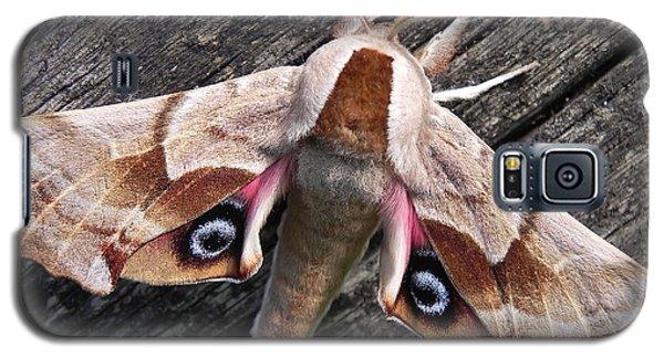 One-eyed Sphinx Galaxy S5 Case