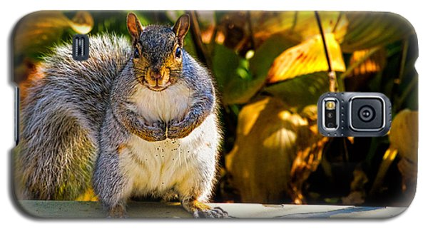One Gray Squirrel Galaxy S5 Case