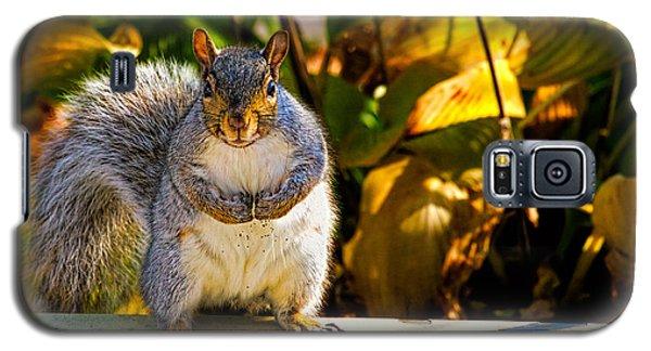 One Gray Squirrel Galaxy S5 Case