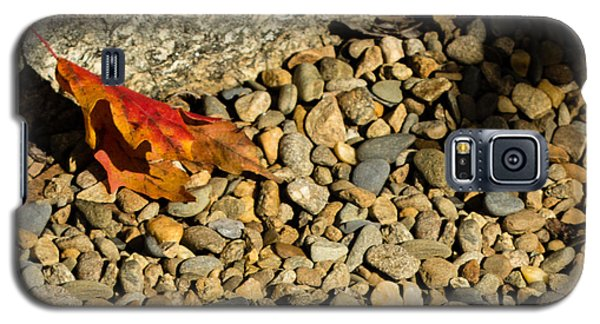 Galaxy S5 Case featuring the photograph One Leaf by Cathy Donohoue