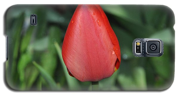 Galaxy S5 Case featuring the photograph One Red Tulip by Diane Lent
