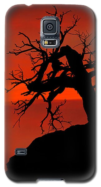 Galaxy S5 Case featuring the photograph One Tree Hill Silhouette by Greg Norrell