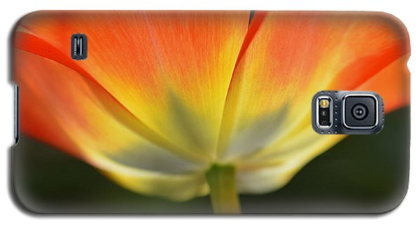 Galaxy S5 Case featuring the photograph One Tulip by JoAnn Lense