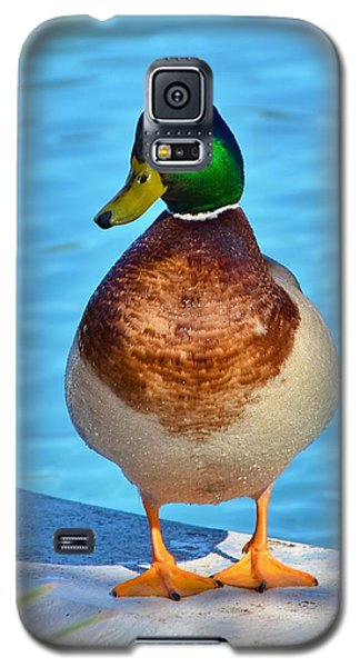 One Well Fed Mallard Duck  Galaxy S5 Case by Bob Sample
