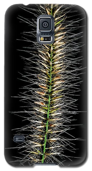 Galaxy S5 Case featuring the photograph One With Many by Mary Beth Landis