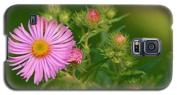 Opening Galaxy S5 Case