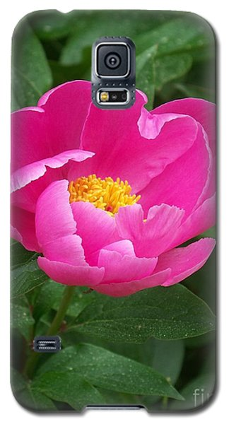 Galaxy S5 Case featuring the photograph Peony  by Eunice Miller
