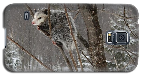Opossum In A Tree Galaxy S5 Case