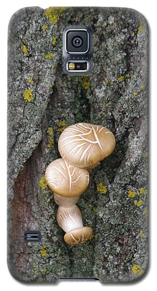 Galaxy S5 Case featuring the photograph Opportunistic Fungi by Sheila Byers